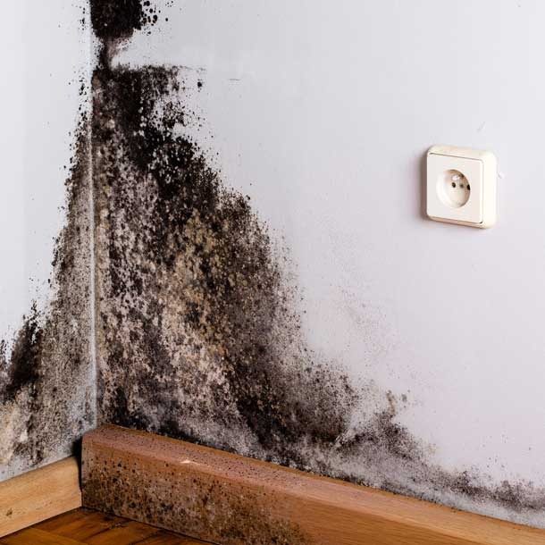 best-van-nuys-mold-removal-company