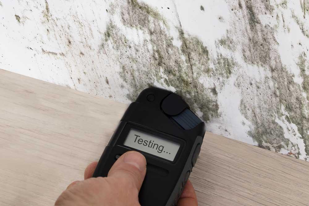 van-nuys-mold-repair-experts